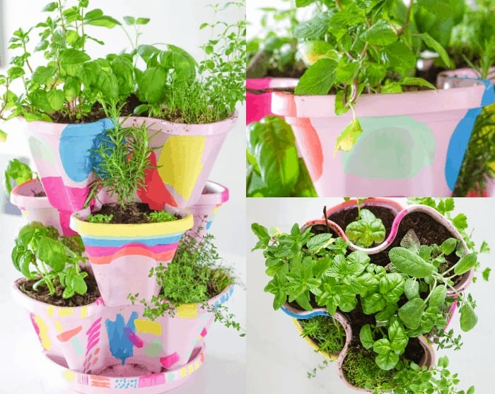 Colorful DIY Indoor herb garden. Looking for a colorful diy herb garden then look no further than this herb garden kit that we're sprucing up.