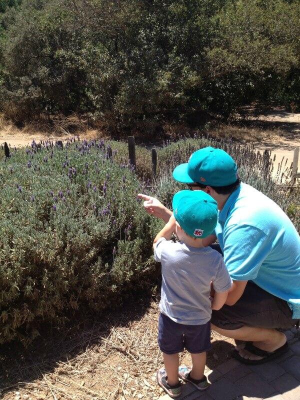 lavender-bees