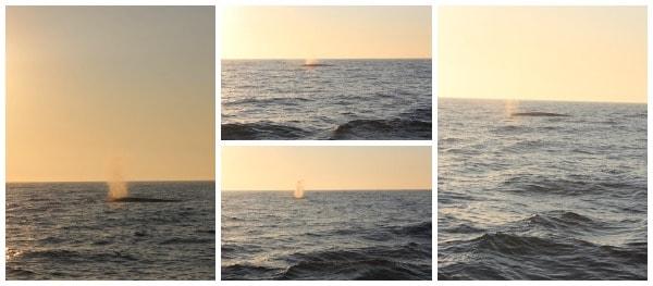 whale-watching-dana-point-2