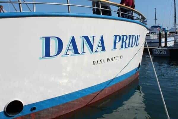 whale-watching-dana-point-3