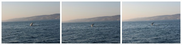 whale-watching-dana-point