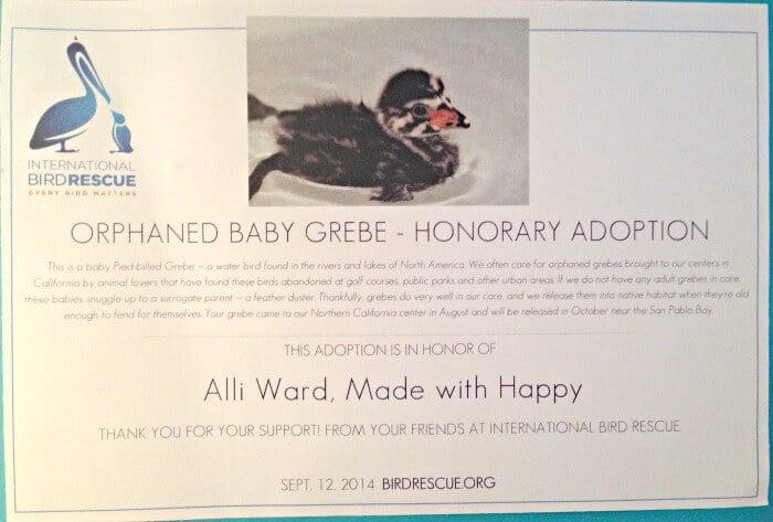 Adopt-a-bird