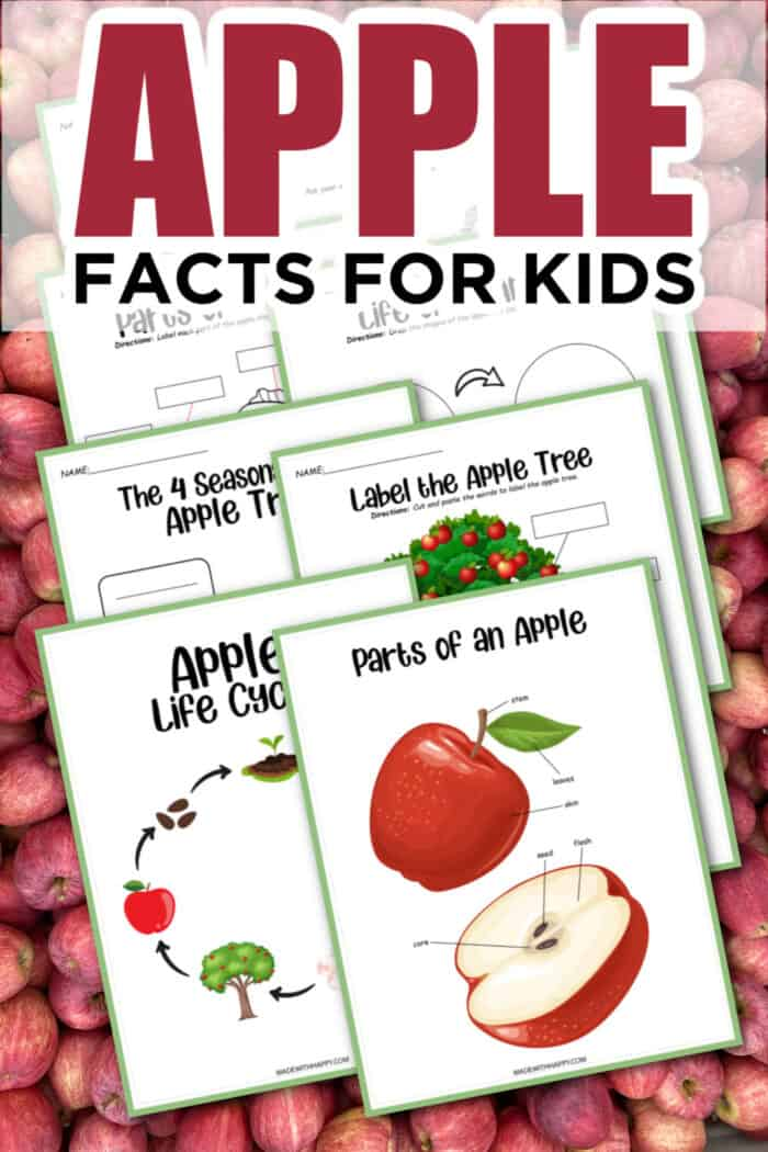 Fun Facts For Kids about Apples