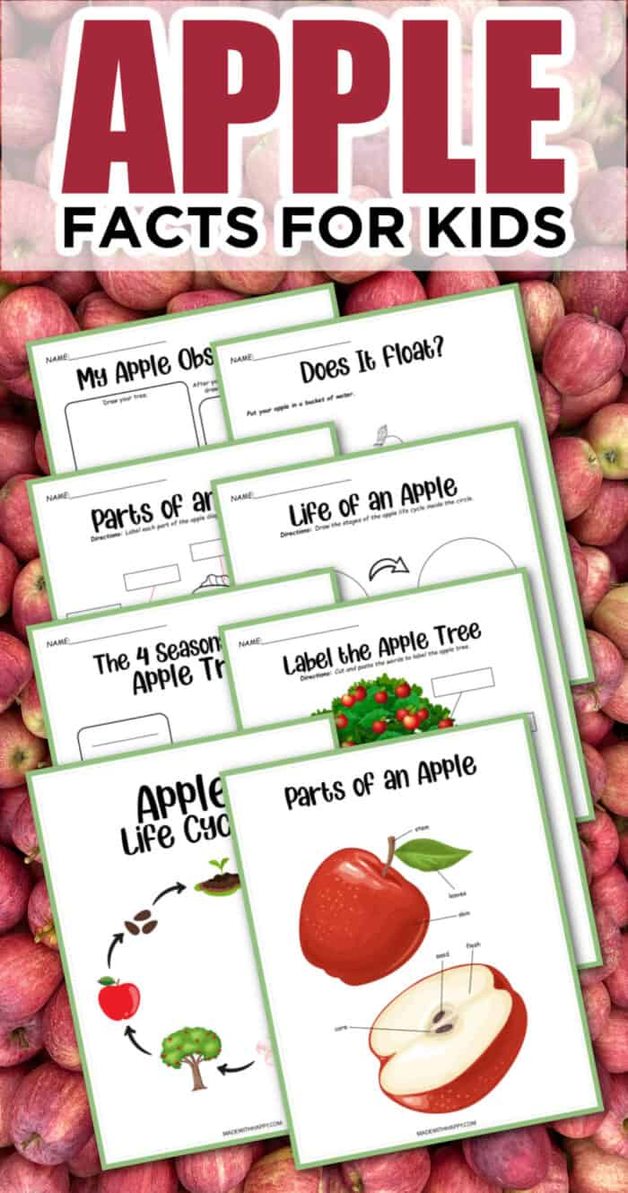 Fun Activities for Kids about Apples