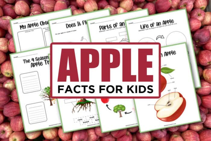 Apple Printables For Kids