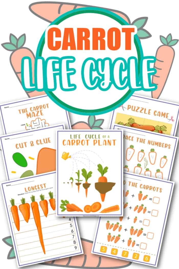 carrot life cycle for kids