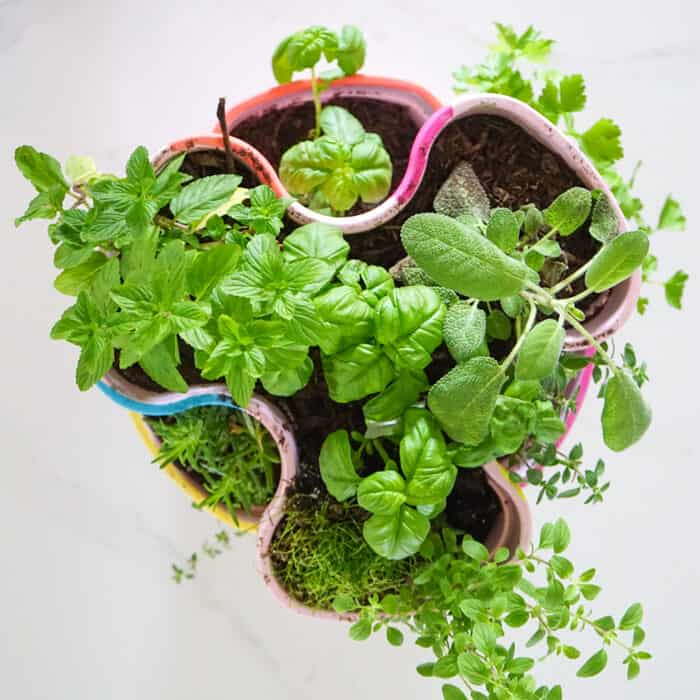 Cooking Herbs. Colorful DIY Indoor herb garden. Looking for a colorful diy herb garden then look no further than this herb garden kit that we're sprucing up.