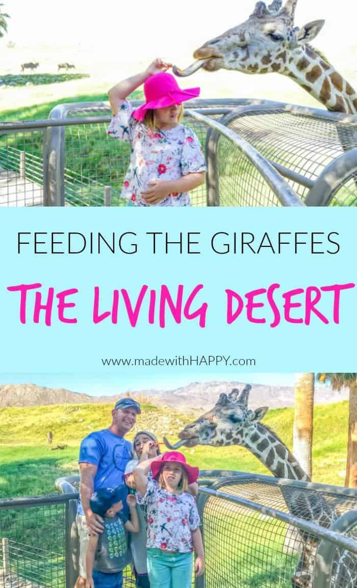 Giraffe Feeding at the Zoo. Visiting the living desert. Things to do in Palm Desert. Family Getaway to the desert. Feeding the Giraffes at the zoo. Zoos of Southern California.