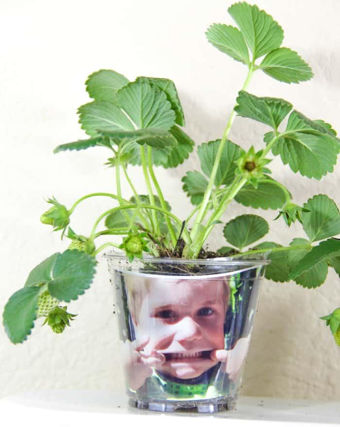 Funny Face Seedling Starter