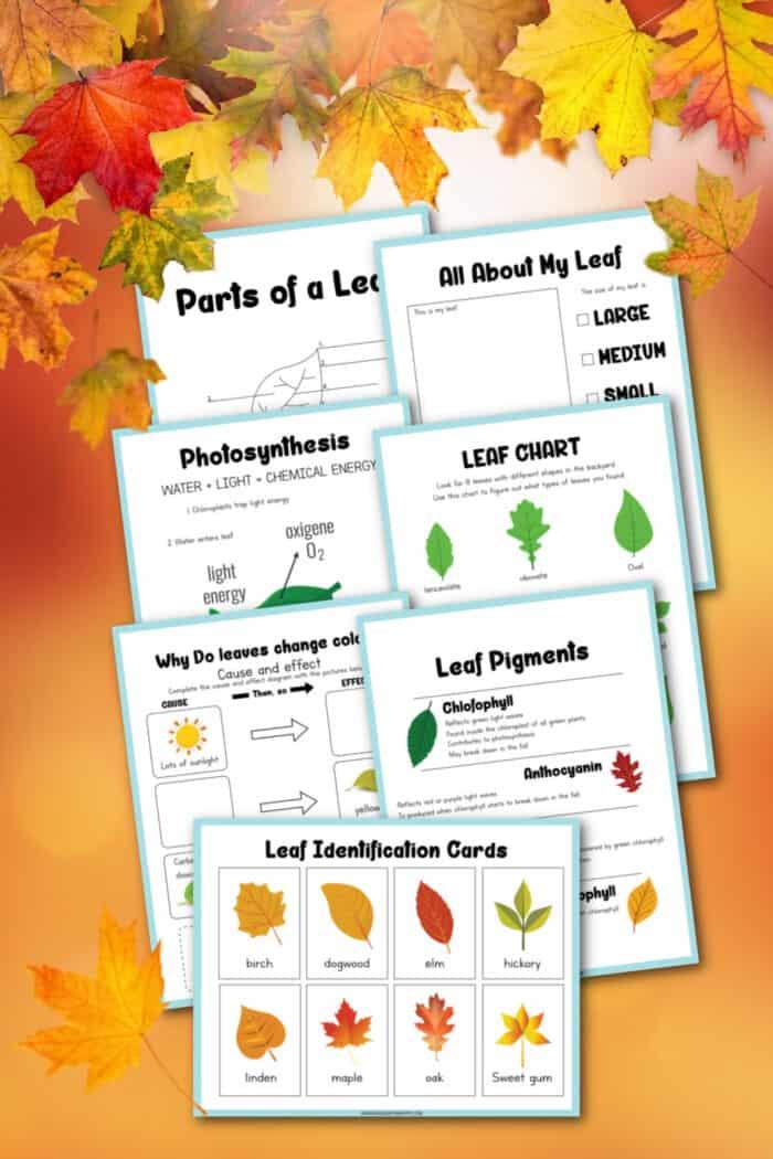 Printable Leaf Activities