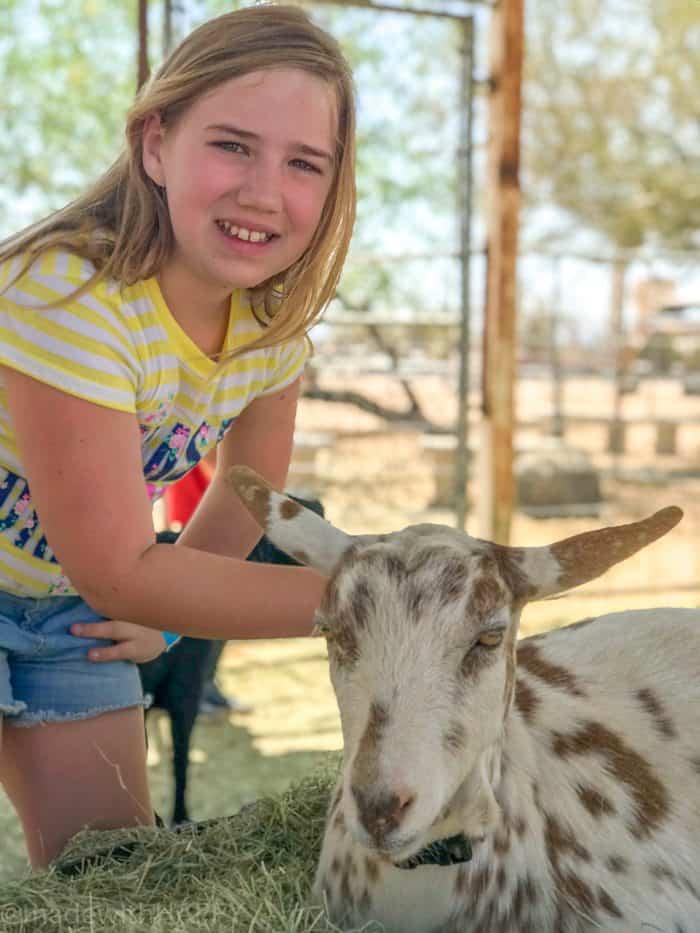 Free Activities for Kids in Arizona. Petting Zoo in Phoenix. MacDonald's Farm Fun in Phoenix Arizona. Fun things to do in Phoenix Arizona. Phoenix Arizona Attractions. Spring Break Road Trip from San Diego to Phoenix. Fun Stops from California to Arizona.