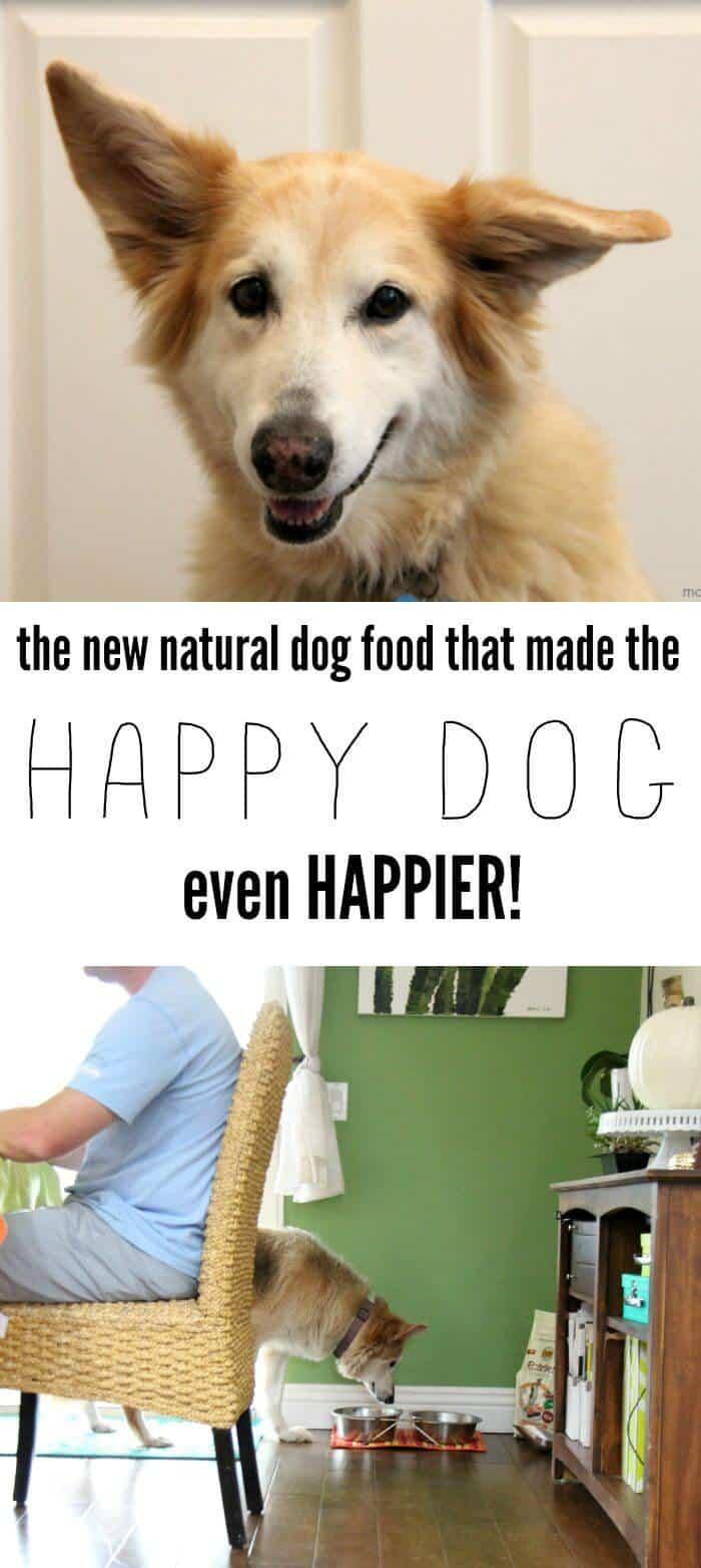 Made with HAPPY Dog | NUTRO™ Rotations™ dog food, an exciting new way to add some variety to your dog's diet, lets you confidently switch from one recipe to another with no transition between bags | Natural Dog Food | AD #HonestToDog