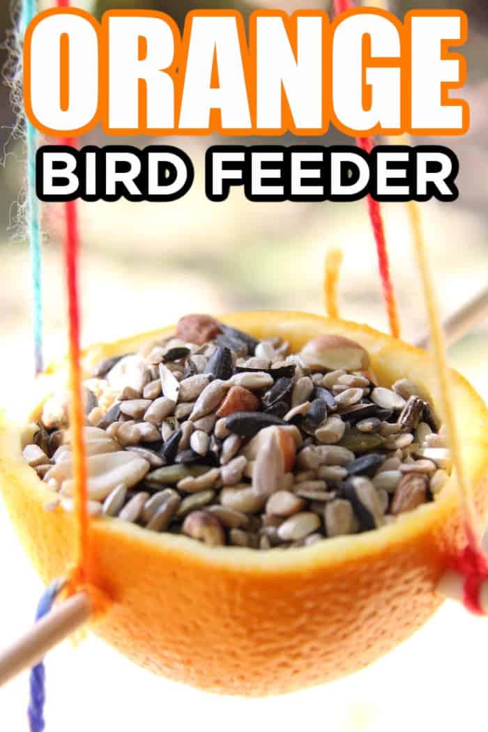 Bird feeder made out of an orange