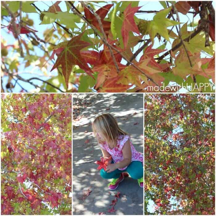 Picking-Fall-Leaves