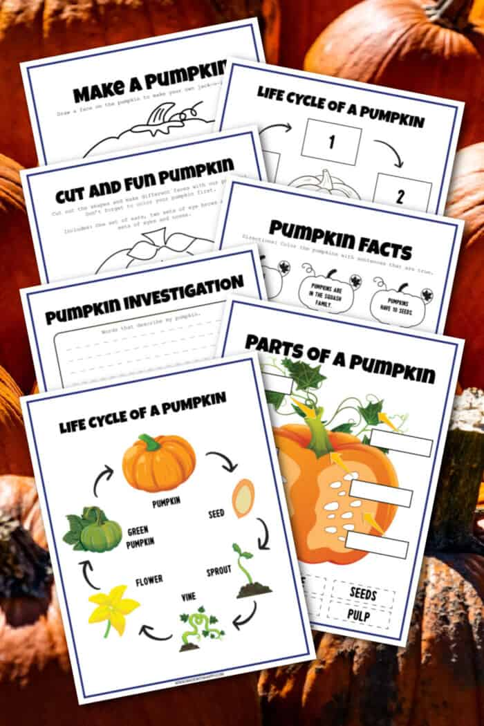 pumpkin facts for kid