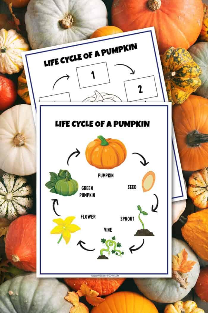 free printable life cycle of a pumpkin
