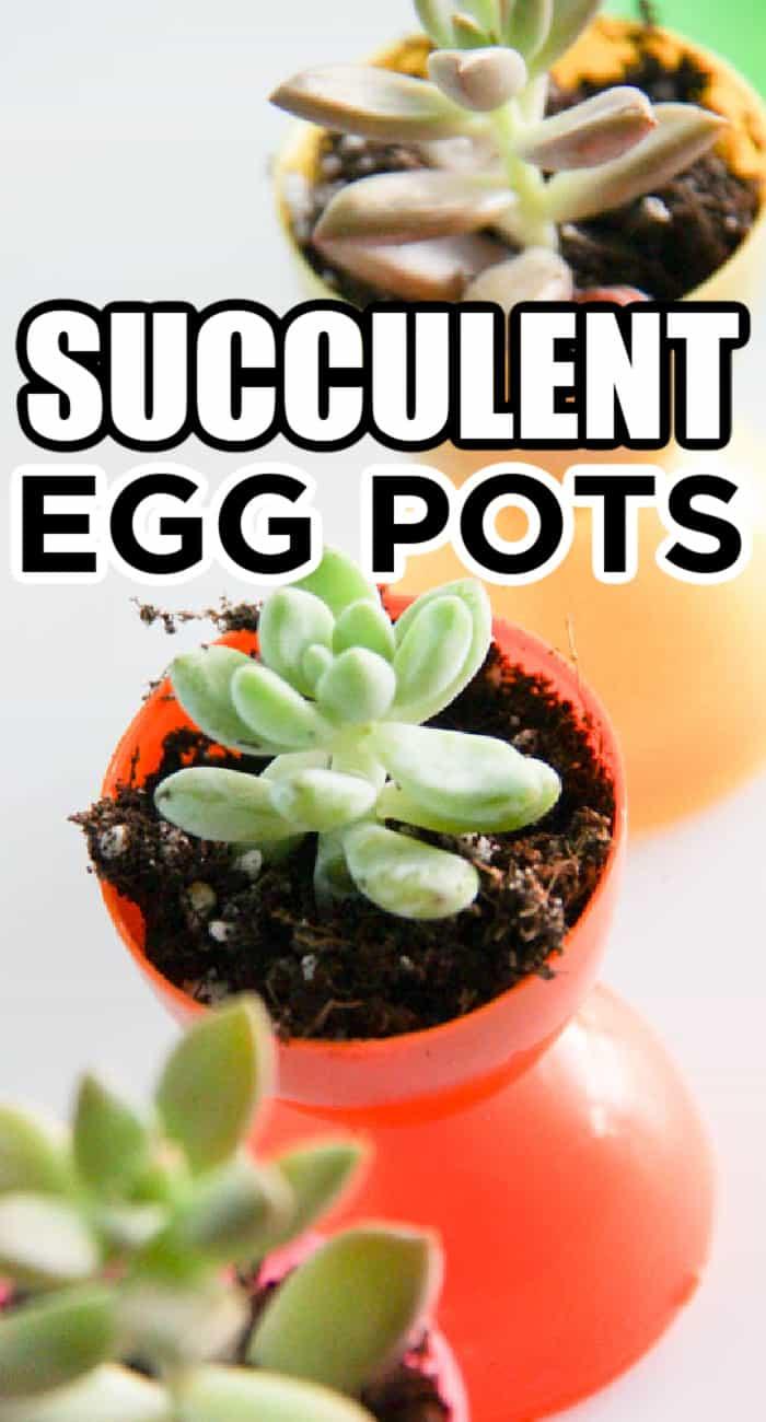 Easter Succulent Ideas