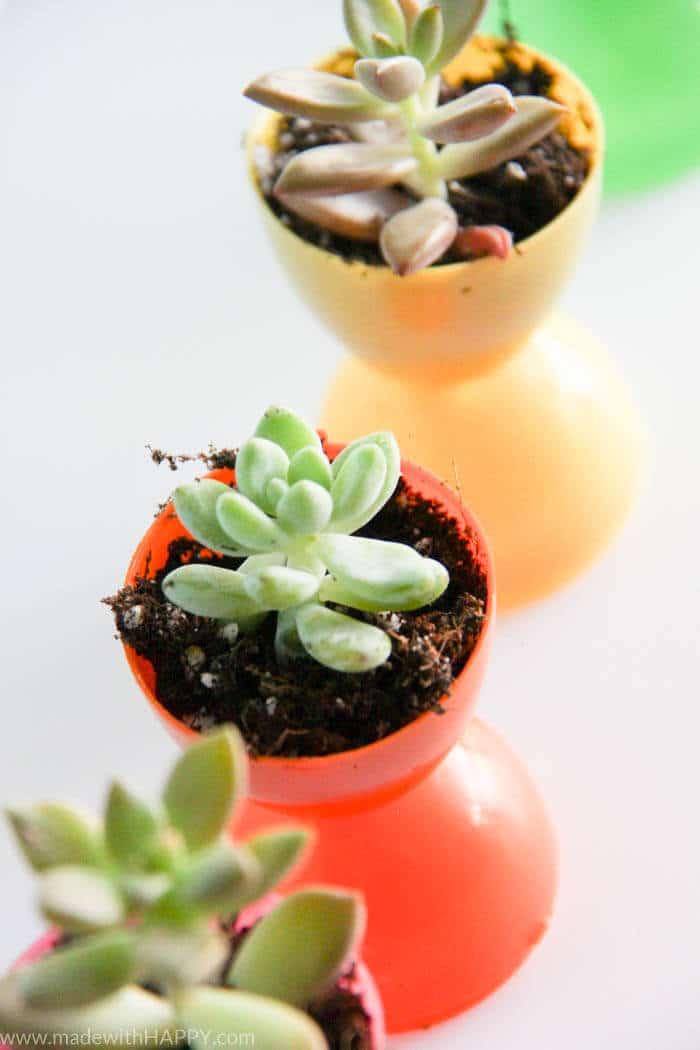 Plastic Easter Egg Pots | Succulent Egg Pots | Flowers in Easter Eggs | Easter Decorations | Easter Table Settings | Rainbow Easter | www.madewithHAPPY.com