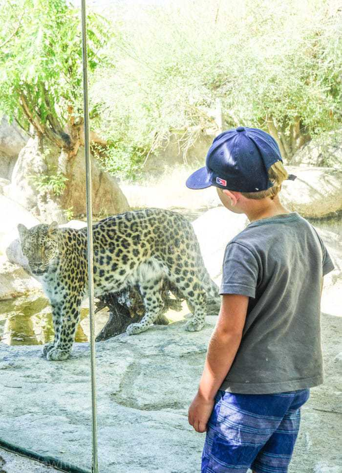 Leopard Sighting. Visiting the living desert. Things to do in Palm Desert. Family Getaway to the desert. Feeding the Giraffes at the zoo. Zoos of Southern California.