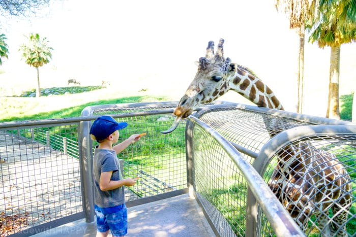 Kids feeding Giraffes. Visiting the living desert. Things to do in Palm Desert. Family Getaway to the desert. Feeding the Giraffes at the zoo. Zoos of Southern California.