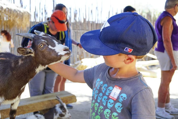 Petting Kraal. Petting Zoo. Visiting the living desert. Things to do in Palm Desert. Family Getaway to the desert. Feeding the Giraffes at the zoo. Zoos of Southern California.