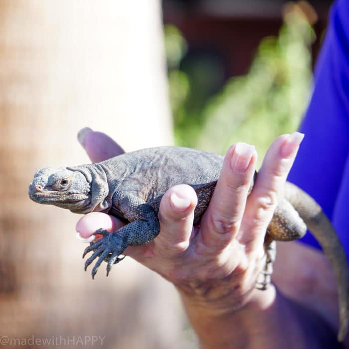 Petting Reptiles. Visiting the living desert. Things to do in Palm Desert. Family Getaway to the desert. Feeding the Giraffes at the zoo. Zoos of Southern California.