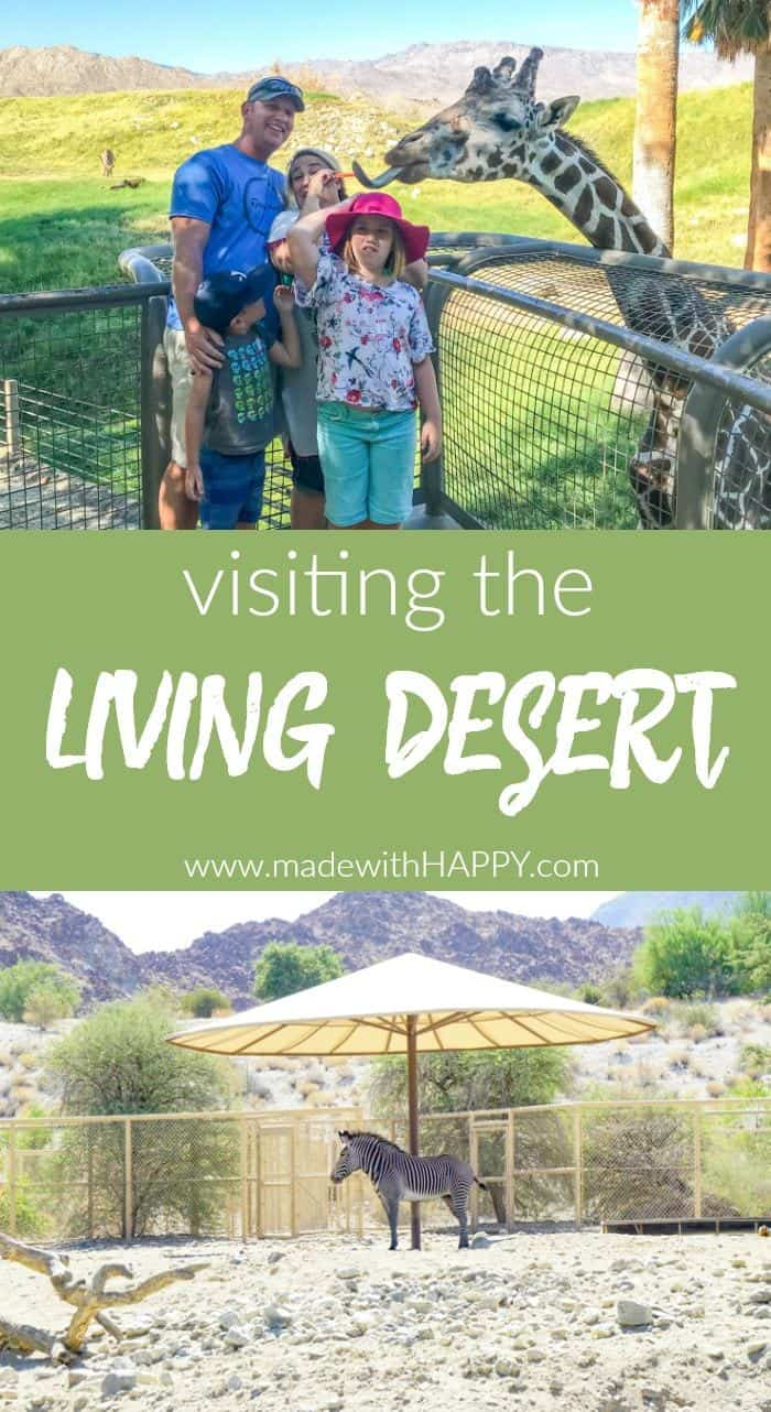 Visiting the living desert. Things to do in Palm Desert. Family Getaway to the desert. Feeding the Giraffes at the zoo. Zoos of Southern California.
