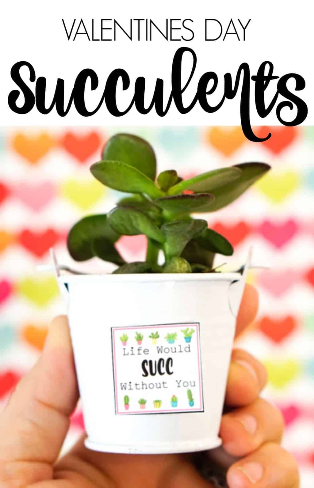 Fun inexpensive Valentines Day Ideas. Valentines Day Succelents are great for older school grade kids. Free printable Valentines are great with succulents are all the gifts needed.