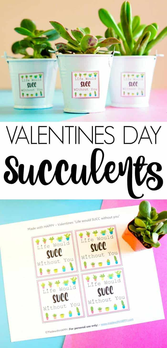Valentines Day Succelents are great for older school grade kids. Free printable Valentines are great with succulents are all the gifts needed.