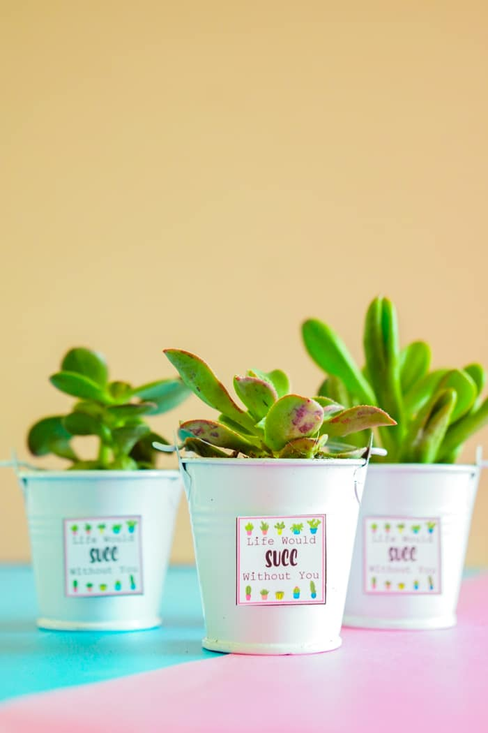 Sweet Succulent Valentines Day Ideas. Valentines Day Succelents are great for older school grade kids. Free printable Valentines are great with succulents are all the gifts needed.