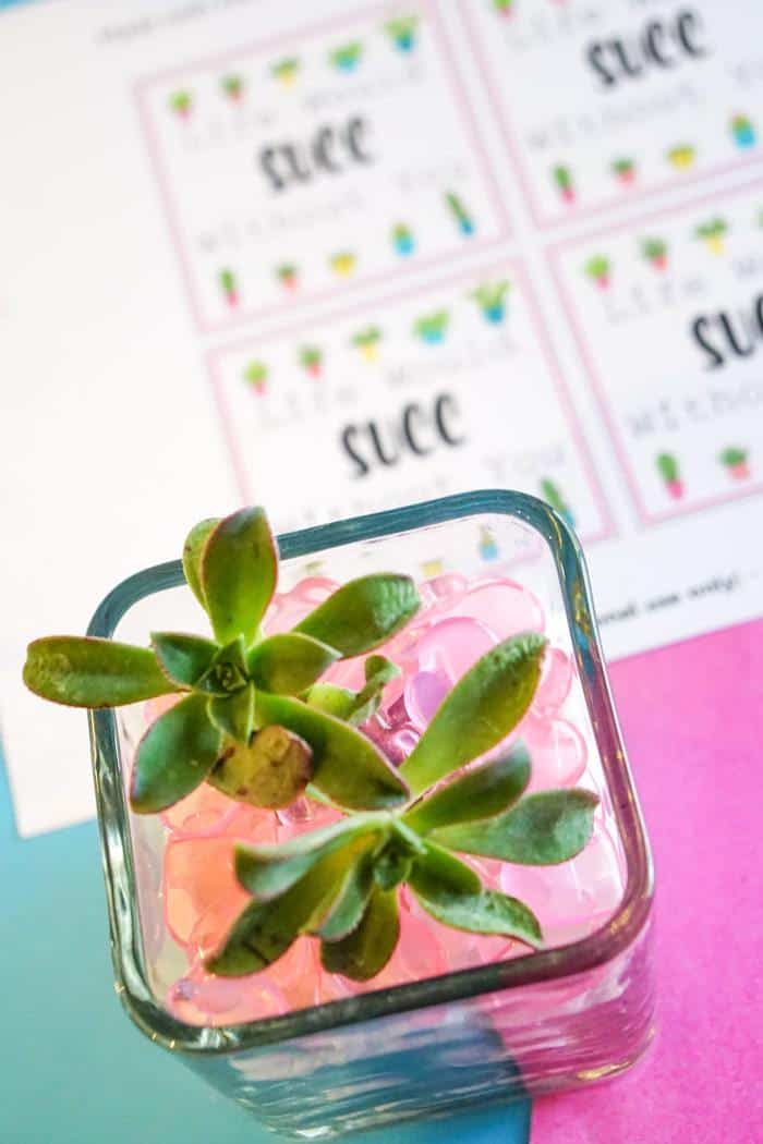 Flower Valentines for teachers. Valentines Day Succelents are great for older school grade kids. Free printable Valentines are great with succulents are all the gifts needed.