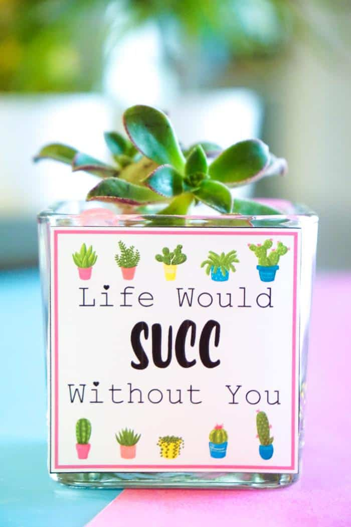 Life would SUCC without you! Valentines Day Succelents are great for older school grade kids. Free printable Valentines are great with succulents are all the gifts needed.