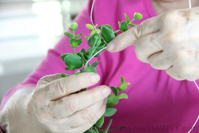 boxwood-wrapping