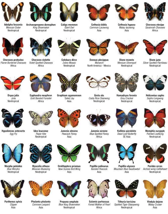 butterfly-directory