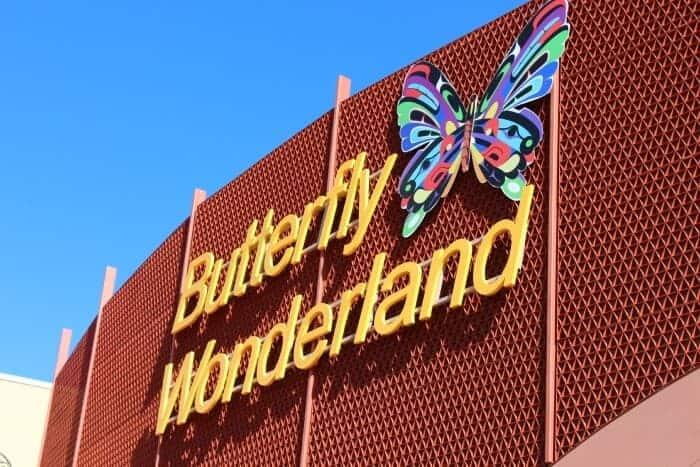 butterfly-wonderland-1