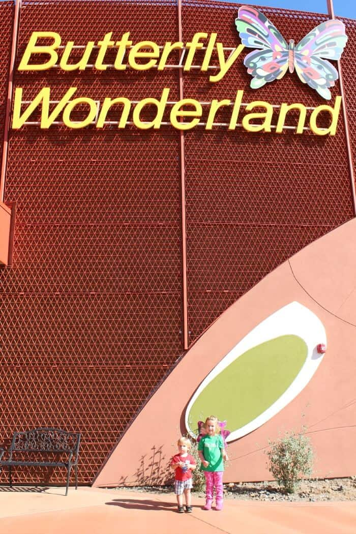 butterfly-wonderland-10