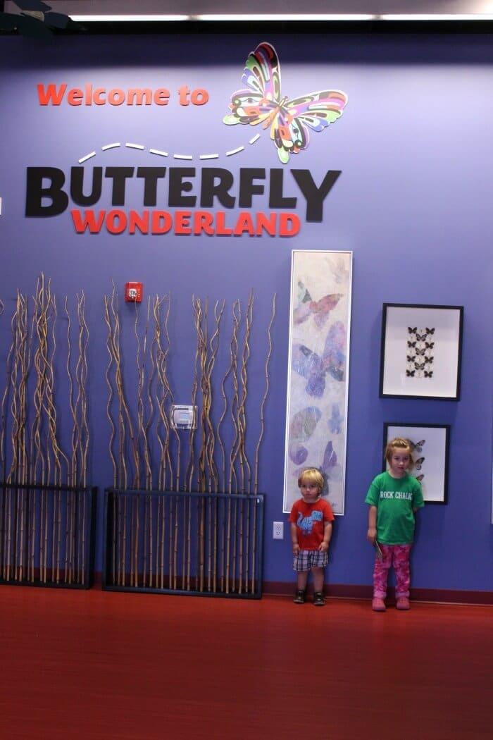 butterfly-wonderland-2