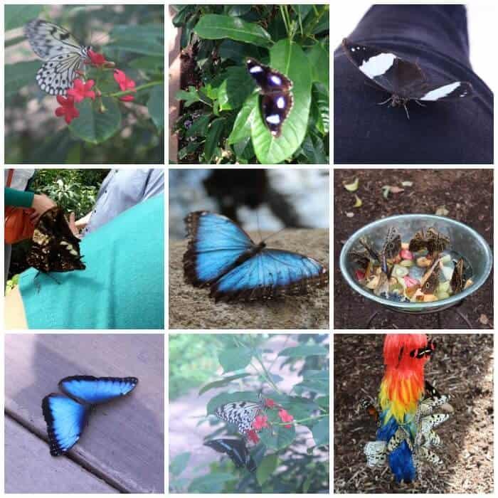 butterfly-wonderland-4