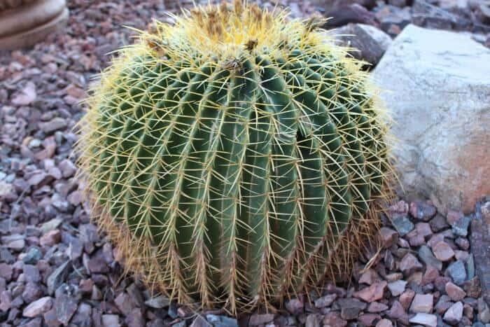 cactus-nature