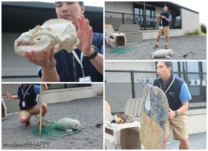 demonstration-marine-mammal-rescue