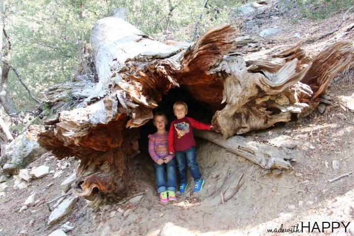 inside-the-tree