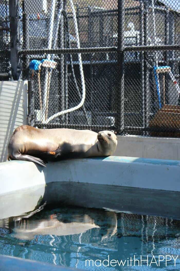 sea-lion-rehibiliation