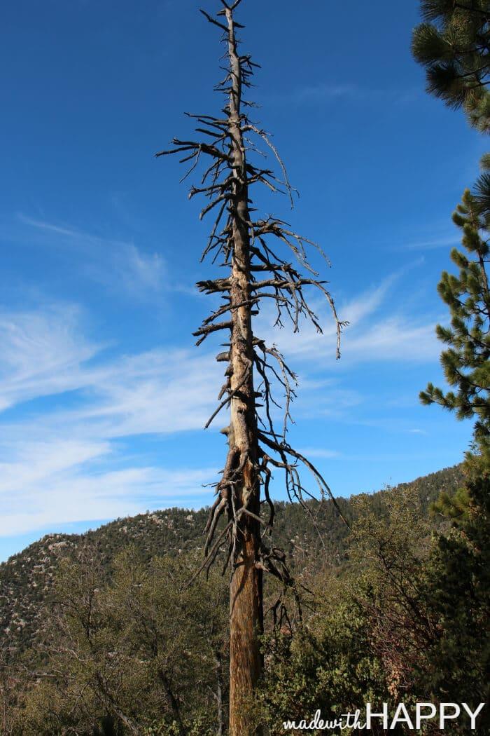 unique-tree-hiking